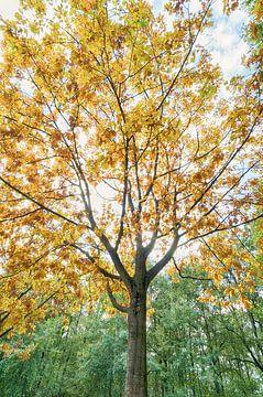 Herbst von Mark Bolijn