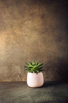 Sukkulente Zimmer Zimmerpflanze in rosa Keramik-Topf von Iryna Melnyk