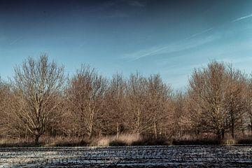 Vlaamse velden #1 van Reinhold Podevijn