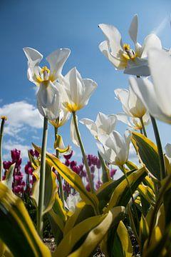 Tulpen von Johan van der Helm