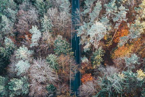 Luftaufnahme Wald mit Bäumen und Straße