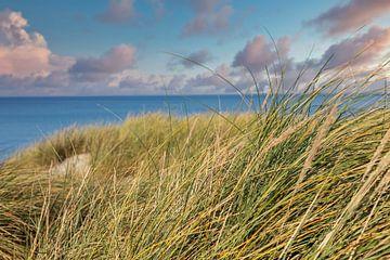 Sanddüne an der Ostsee von Uwe Merkel