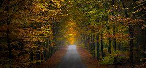 Herfst scene panorama van
