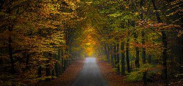 Herfst scene panorama van Pascal Raymond Dorland