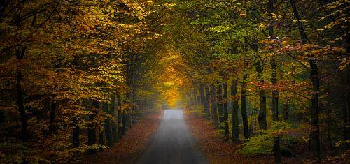 Herbstszenenpanorama von