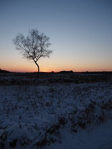 Sonnenuntergangs-Heide von Tonny Swinkels