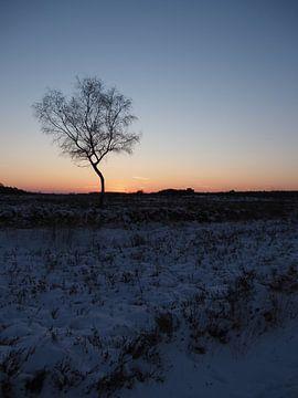 Zonsondergang Heide van Tonny Swinkels
