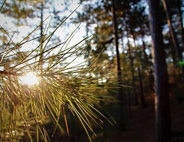 Bos zonsondergang van Marije Zwart