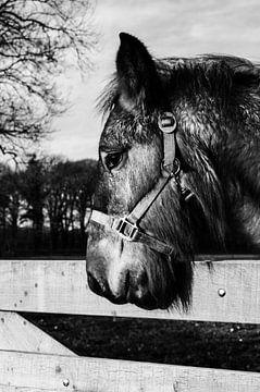 Paard von Danny Puts