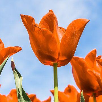 Oranje boven (Fijne Koningsdag) van Fotografie Jeronimo