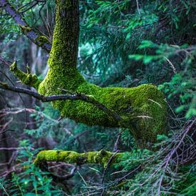 Tree in forest van Arkadiusz Kurnicki