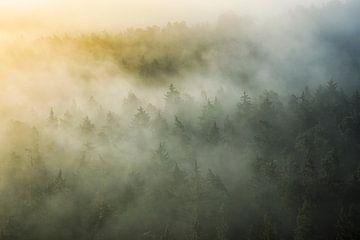 mystischer Pfälzerwald von Daniela Beyer