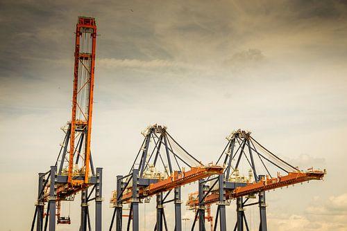 Hijskranen voor overslag containers op de Tweede Maasvlakte, Rotterdam