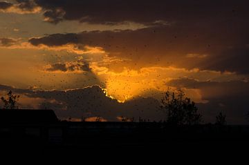 Zonsondergang van Cor Bak