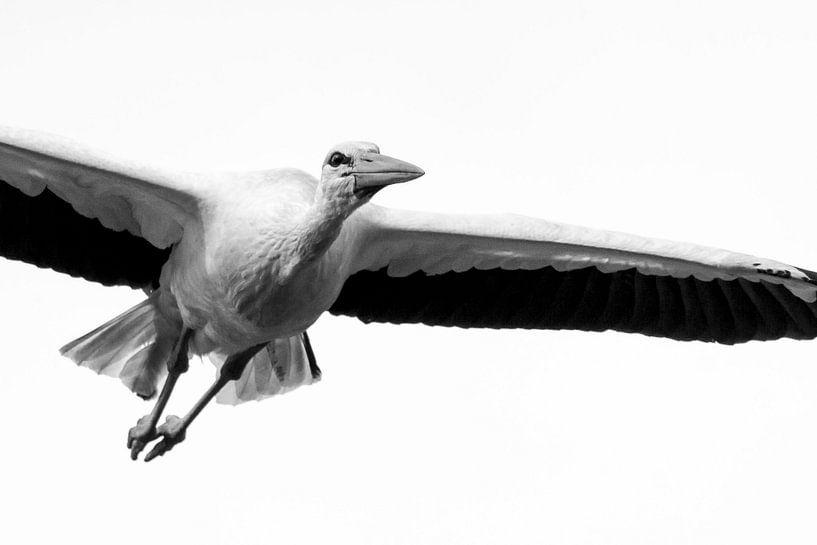 Ooievaar in vlucht zwart wit van Rando Kromkamp