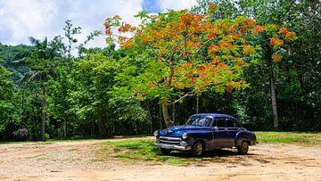 Blauwe oldtimer onder boom in Cuba van Jessica Lokker
