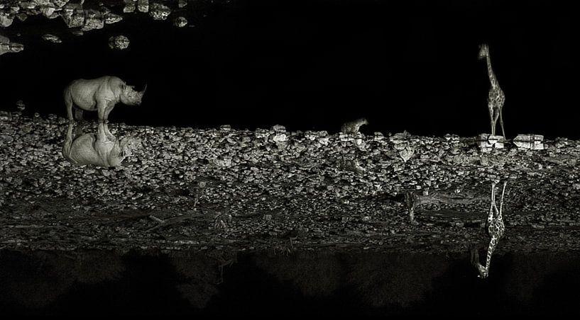 Mirrored Wildlife van BL Photography