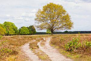 Baum im Bereich Maashorst von Special Moments MvL
