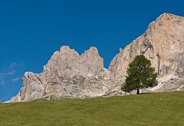Eenzame boom in de Dolomiten von Rene van der Meer