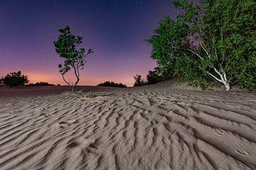 Die Nacht – Nationalpark De Loonse en Drunense Duinen von Laura Vink