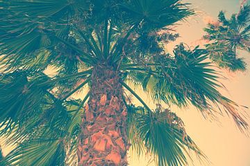 Palmen van BVpix