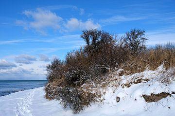 Winter op de hoge oever van Ostsee Bilder