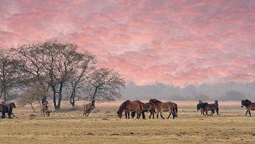 Exmoor-Ponys auf der Wiese 2 von Marcel Kieffer