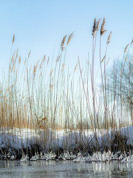 Winterse Haarrijnse Plas van Martijn Wit