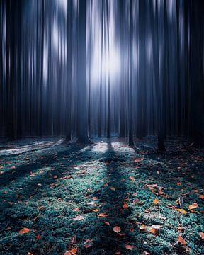 Der Winter kommt..... von Niels Tichelaar