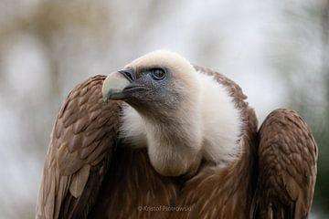 Looking @ me? van Kristof Piotrowski