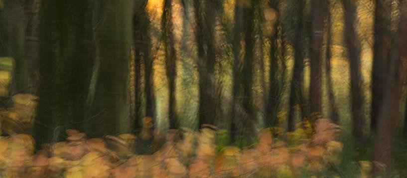 Herfst bos glorie van Chantal van Dooren