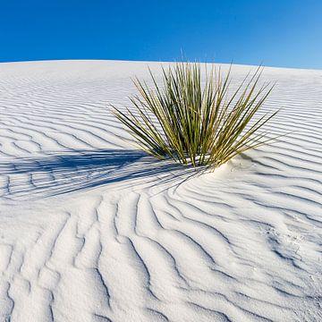 Wellenzeichnung der Dünen, White Sands National Monument von Melanie Viola