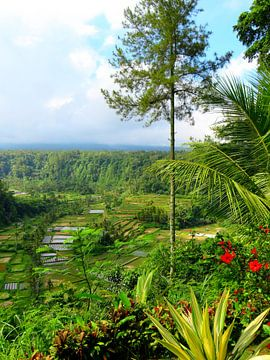 Prachtige rijstterrassen op Bali van Thomas Zacharias