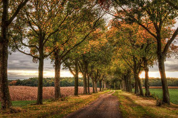 Het eerste herfstgevoel