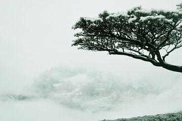 Opdoemend berglandschap in de mist in Torres del Paine, Chili van Carl van Miert