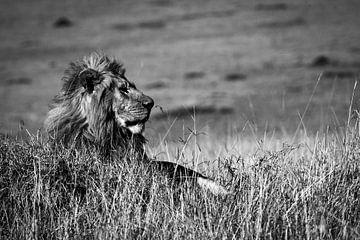 König Löwe von Marcel Henderik