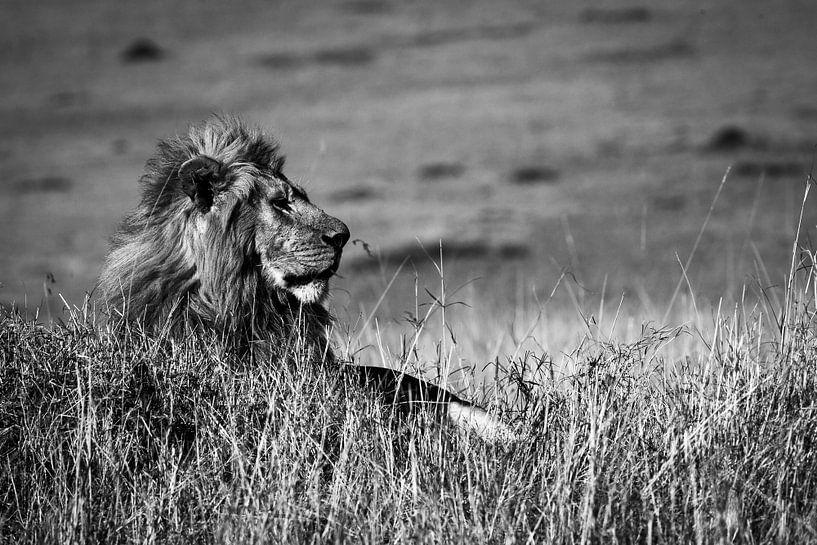 Koning leeuw van Marcel Henderik