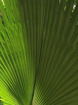 Groen palm blad structuur  van Samantha Enoob
