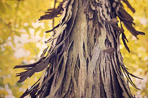 Grillige boomschors