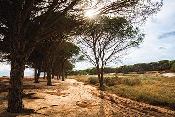 Strand in Sardinië | Italië van Yvette Baur