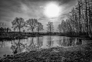 Natuur in zwart wit met vaag voorjaarszonnetje in Darp van Pierre Verhoeven