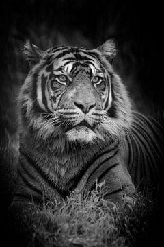 Siberische tijger van Tilly Meijer