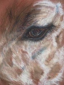 Giraffen oog.