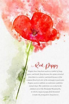 rode papaver van Theodor Decker