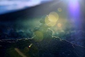 The little cairn sur Arc One