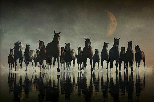 Paarden Stampede in maanlicht