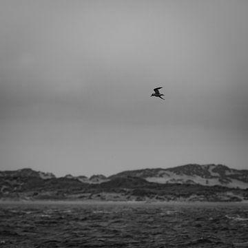 Vogel boven zee van Bas Schneider
