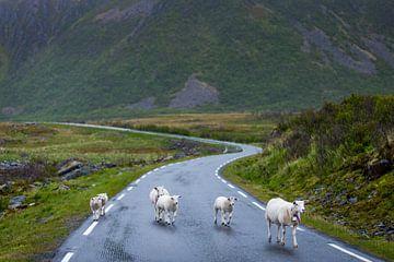 Des moutons sur la route