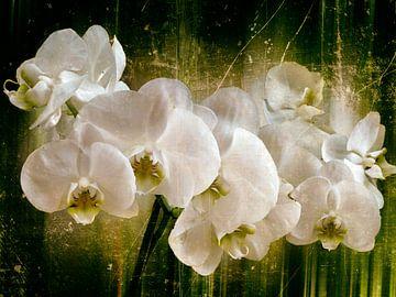 witte orchidee van Christine Nöhmeier