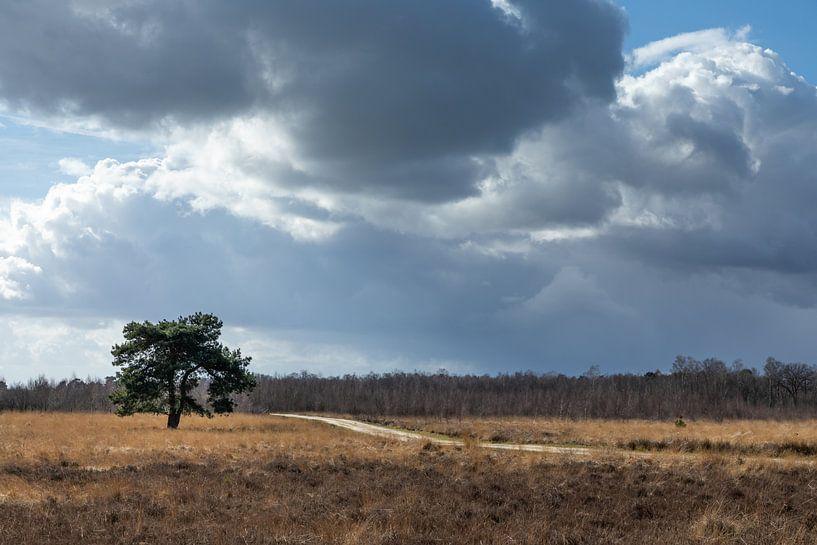 Wolkenluchten van Hetwie van der Putten